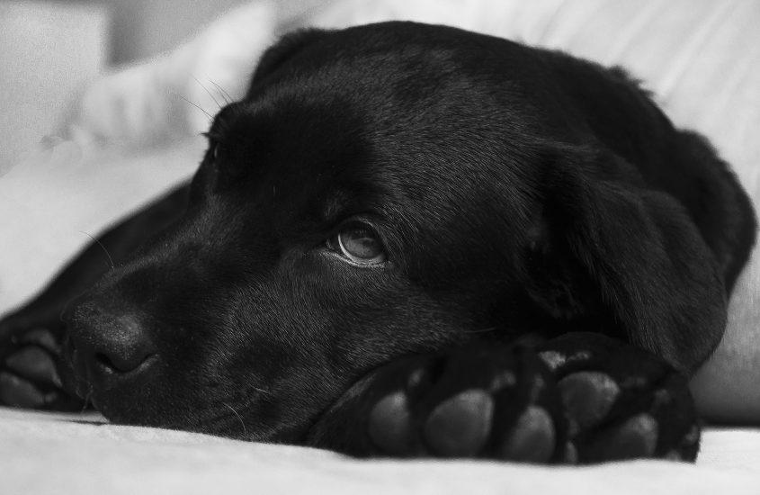 Erkältung beim Hund – Was ist zu tun?
