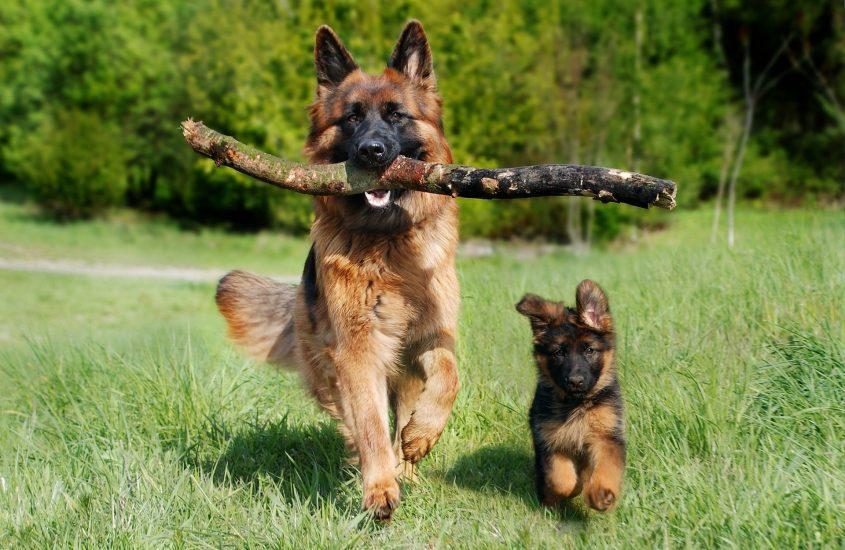 Die richtige Ernährung des Hundewelpen