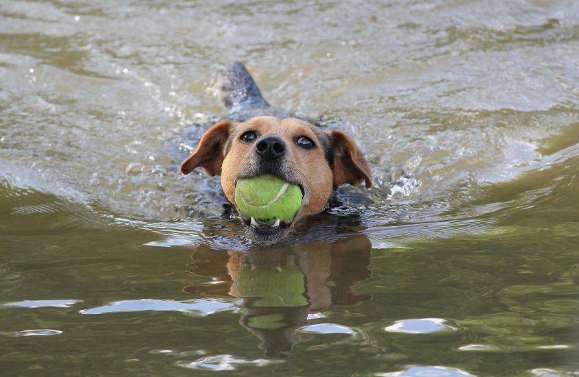 Für jedes Team: Mensch und Hund gibt es die richtige Sportart