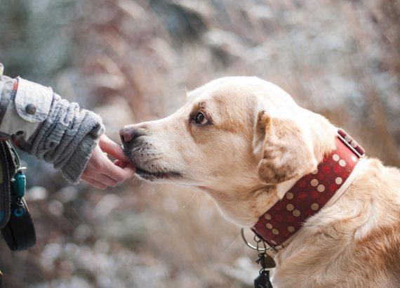 Stress-abbauen-beim-Hund