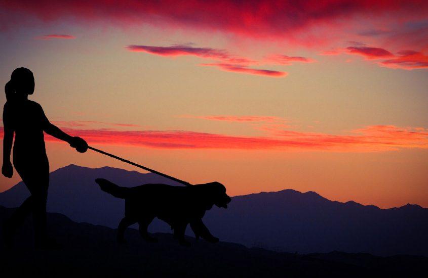 Reisen mit dem Hund – Das solltest du beachten!
